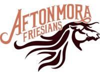 Aftonmora Friesians